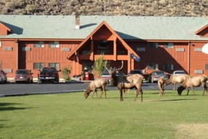 Yellowstone Village Inn - Wildlife Central : Exceptional value in moderately-priced accommodations. Indoor pool, continental breakfast & laundromat, kitchenettes. See wildlife out your front window.
